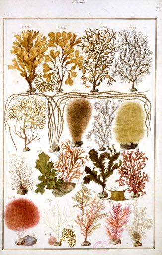 Dessins de plantes marines