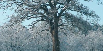 """Photo d'arbre symbolisant l'atelier généalogie tenu lors des """"Journées européennes du Patrimoine"""" le 19/09/15 à la médiathèque d'Auray"""