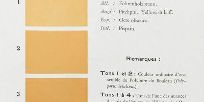 """Page 310 concernant la couleur """"Pitchpin"""", cote18463."""