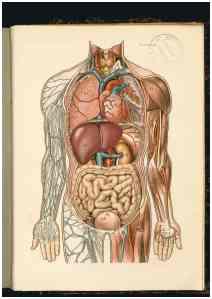 Larousse médical 1912. DR