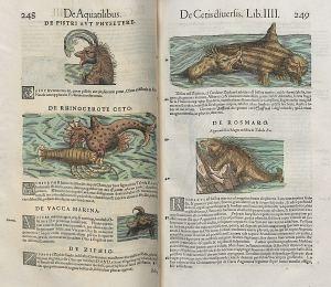 Bibliothèque Les Champs Libres, cote 4512/3. Domaine public
